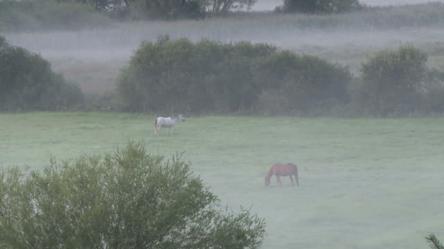 ws zo view of horse grazing in field with early morning fog / wawern, rhineland-palatinate, germany - grazing stock videos & royalty-free footage