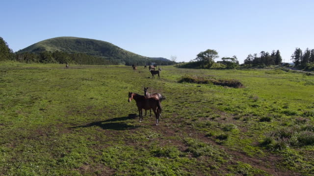 view of horses at pasture and clear sky - gruppo medio di animali video stock e b–roll