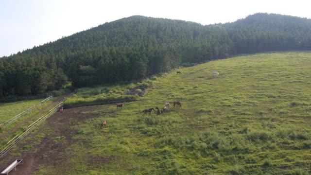 view of horses at pasture and mountain - gruppo medio di animali video stock e b–roll