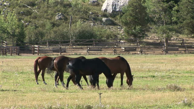 view of horses grazing in the field of grand teton united states - grand teton stock-videos und b-roll-filmmaterial