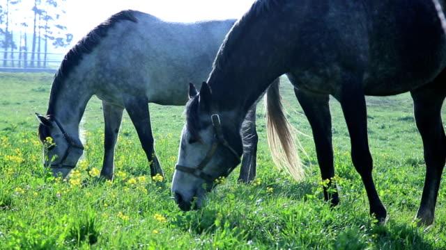 view of horses in jeju island - arbeitstier stock-videos und b-roll-filmmaterial