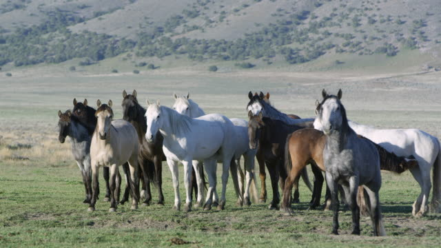 View of horses standing together as the breeze moves there hair