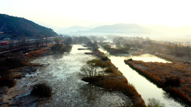 vidéos et rushes de view of hwapocheon wetland ecological park (habitat for winter migratory birds) in gyeongsangnam-do, gimhae, south korea - arbre sans feuillage