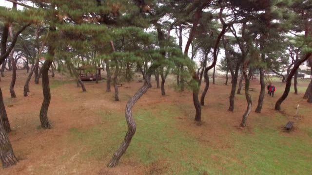 view of imhan-ri park with pine tree(local landmark) and rural scene - local landmark stock videos and b-roll footage