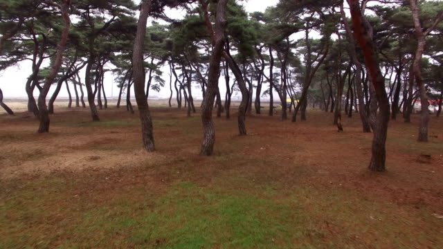 view of imhan-ri park with pine tree(local landmark) - local landmark stock videos and b-roll footage