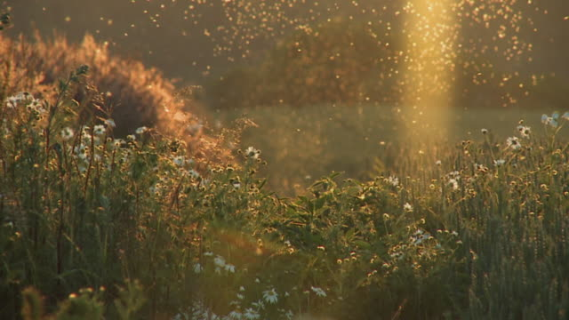 ms slo mo view of insects flying over wild flowers in field / denmark - insect stock videos & royalty-free footage