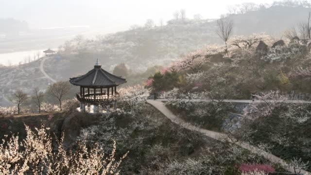 View of Japanese Apricot Tree and Palgakjeong Pavilion in Maehwa Village