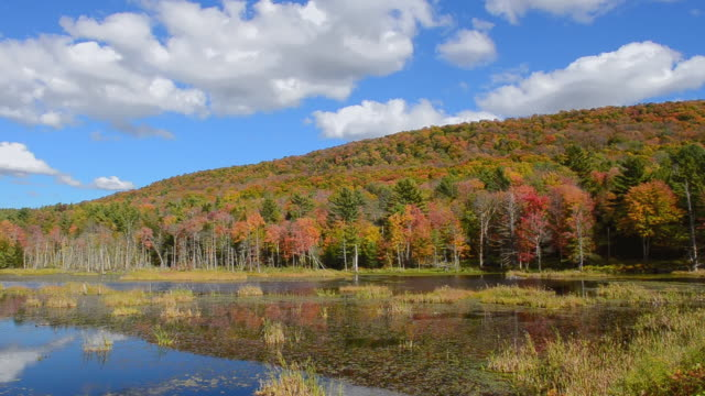 ws pan view of jericho burlington vermont fall foliage colors on lake in northern new england with fall colors in october / burlington, vermont, united states - vermont stock videos & royalty-free footage
