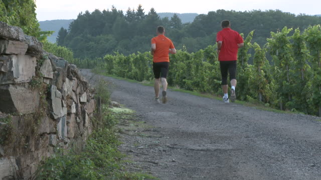 vídeos y material grabado en eventos de stock de ws view of jogger jogging in vineyard / saarburg, saar-valley, rhineland-palatinate, germany - sólo hombres maduros