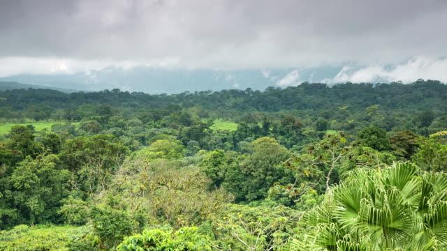 WS T/L View of jungle in morning mist in arenal area / La Fortuna, Alajuela, Costa Rica
