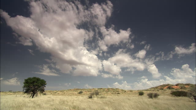 vídeos de stock, filmes e b-roll de ws t/l view of kalahari desert / kalahari desert, north west, south africa - deserto de kalahari