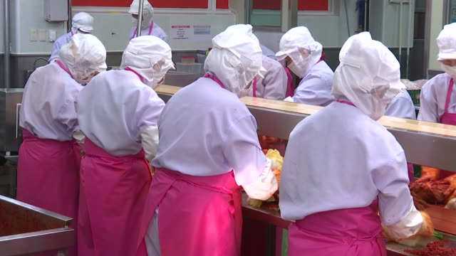 view of kimchi production line at kimchi factory (popular traditional fermented korean side dish) - fermenting stock videos and b-roll footage
