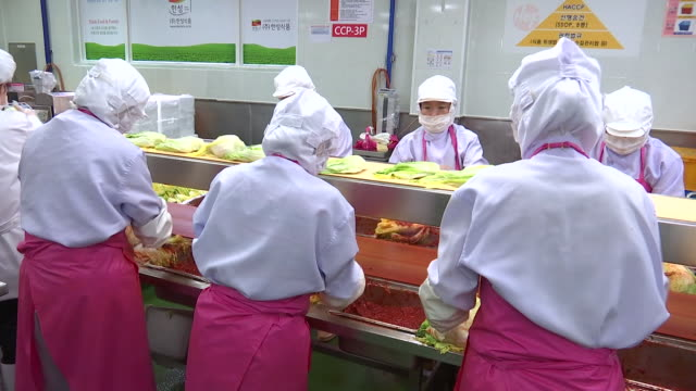 view of kimchi production line (popular traditional fermented korean side dish) - fermenting stock videos and b-roll footage