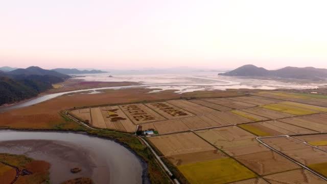 View of Korean and circle drawing in rice paddy at Suncheonman bay(Natural Landmark,Ecological Park)