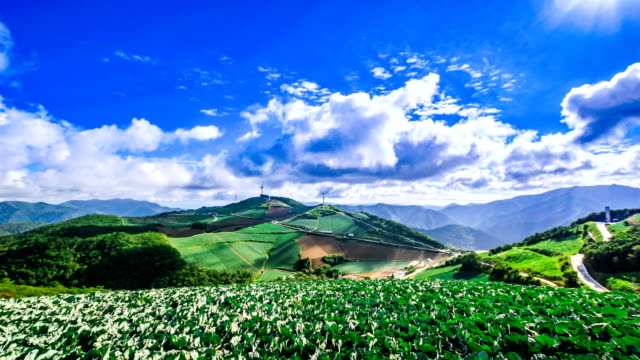 View of Korean cabbage filed in Anbandeok (high altitude cool region) Village (Famous place in Korea)