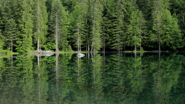 ws view of lac verte mountain lake and pine trees at early morning / chamonix, haute savoie, france - coniferous stock videos & royalty-free footage