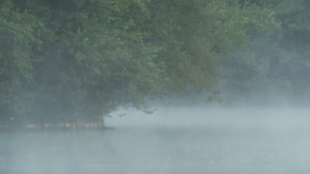 ms view of lake covered with fog and trees hanging / godalming, surrey, uk - rosso stock videos & royalty-free footage