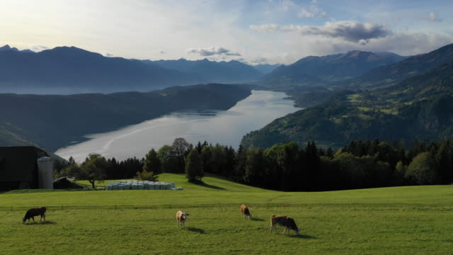 view of lake millstatt and a farm in karnten, millstatt, austria - domestic cattle stock videos & royalty-free footage