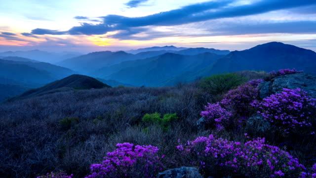 view of landscape and azaleas on jiri mountain at sunset - heidekraut stock-videos und b-roll-filmmaterial