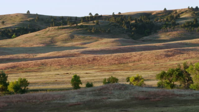 ws pan view of landscape / custer state park, south dakota, united states - custer staatspark stock-videos und b-roll-filmmaterial