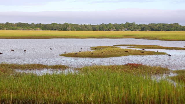 ws ts view of landscape of marsh / st. simons island, georgia, united states - marsh stock videos & royalty-free footage