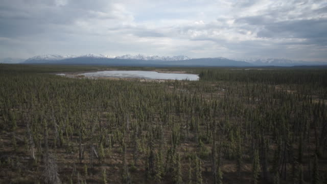 ws pov view of landscape with pine trees and lake in glennallen - アラスカ点の映像素材/bロール