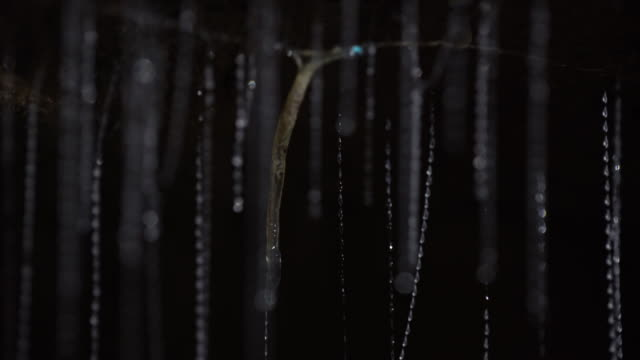 view of larva of glowworms inside of waitomo cave - グローワーム点の映像素材/bロール