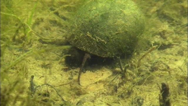 view of living organism under uponeup swamp - mollusk stock videos & royalty-free footage