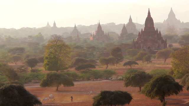 ws ha view of local herdsmen driving cattle and goats on dry dusty tracks at sunset / bagan, burma  - pagoda stock videos & royalty-free footage