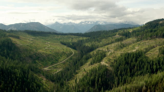ws aerial zi view of logged hillside in wenatchee national forest in front of mountains and clouds / washington, united states - stato di washington video stock e b–roll