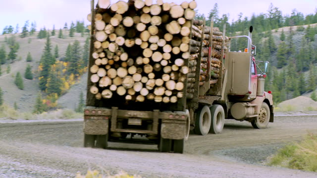 ws pan view of logging truck moving through grasslands / williams lake, british columbia, canada - industria forestale video stock e b–roll
