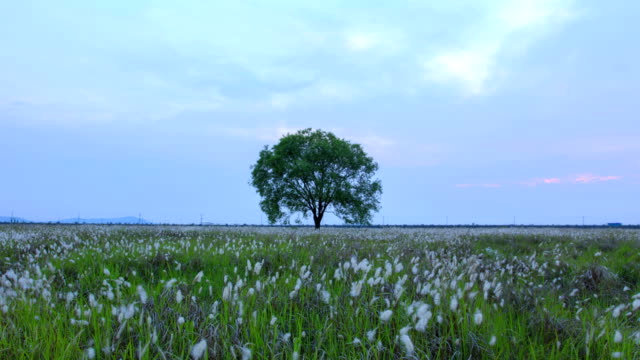 view of lone tree and wind blowing through ppilgikkot flower bed at ueumdo island - furzen stock-videos und b-roll-filmmaterial