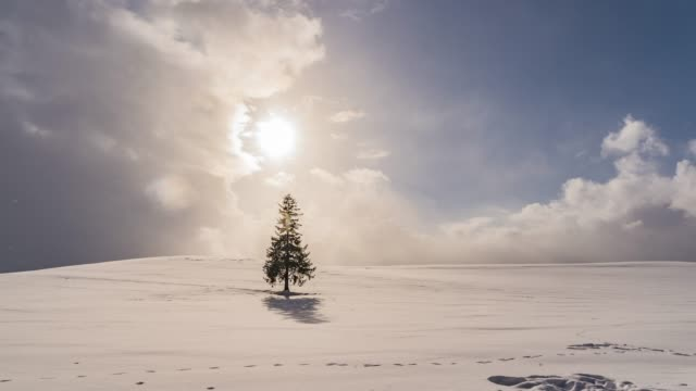 view of lonely christmas tree on snow covered hill in biei, hokkaido, japan - マツ科点の映像素材/bロール