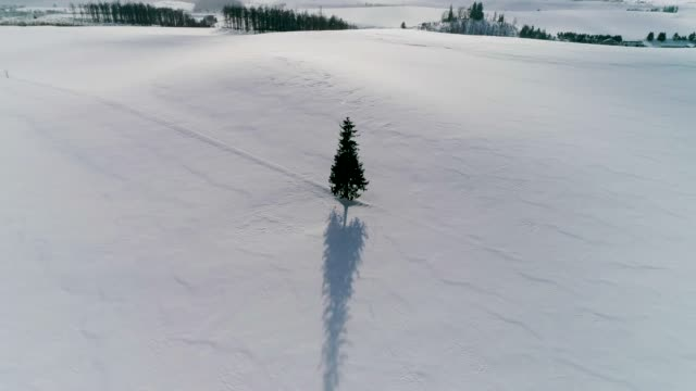 vídeos de stock e filmes b-roll de view of lonely christmas tree on snow covered hill in biei, hokkaido, japan - loneliness