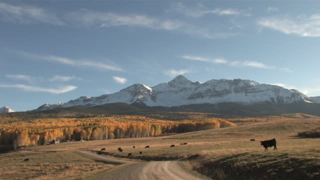MS PAN View of Majestic Rocky Mountains Peaks, Brillant Yellow Aspen Trees / Telluride, Colorado, United States