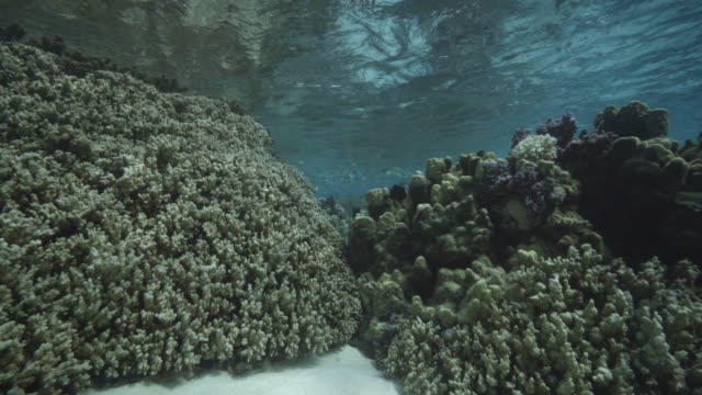 vídeos de stock e filmes b-roll de a view of major bleaching on the coral reefs of the society islands on may 9 2019 in moorea french polynesia major bleaching is currently occurring... - territórios ultramarinos franceses