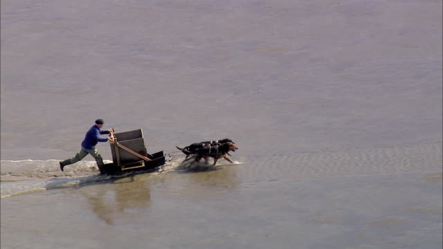 ws aerial ts view of man on cart with dogs / bremerhaven, lower saxony, germany  - cart stock videos & royalty-free footage