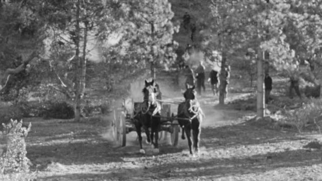 stockvideo's en b-roll-footage met ws view of man on horse and carriage being chased through woods  - paardenkar