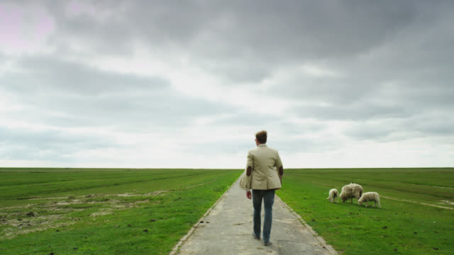 ws view of man wearing sunglasses walking on path, green pastures and sheep on side / st. peter ording, schleswig holstein, germany  - schleswig holstein stock videos & royalty-free footage