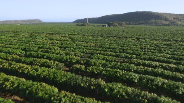 vídeos y material grabado en eventos de stock de ws aerial pov view of mango fields / guayanilla, puerto rico, united states - mango fruta tropical