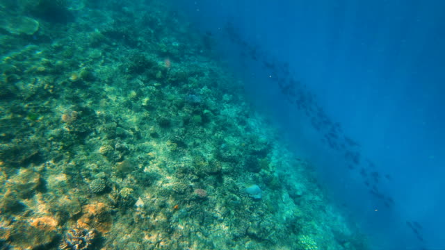 view of marine life ocean coral reef fiji - south pacific ocean stock-videos und b-roll-filmmaterial