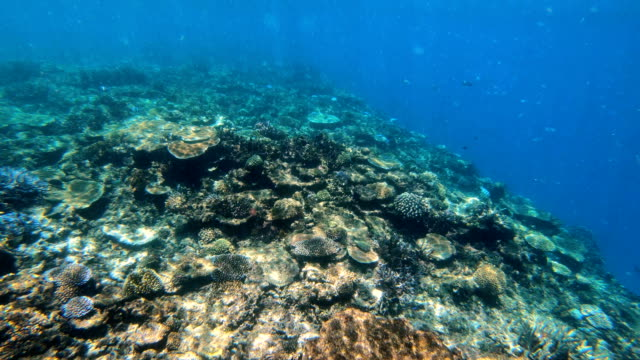 view of marine life ocean coral reef fiji - south pacific ocean点の映像素材/bロール