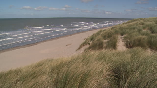 ws view of marram grass swaying on breeze / ostend, flanders, belgium - marram grass stock videos & royalty-free footage