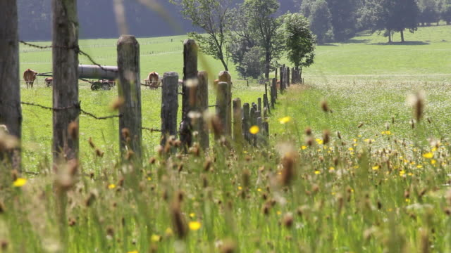 ms view of meadow in south bavaria with cows in background / lenggries, bavaria, germany - wiese stock-videos und b-roll-filmmaterial