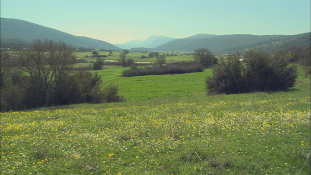 ws tu view of meadow with wildflowers / papigo, ipiros, greece - alm stock-videos und b-roll-filmmaterial