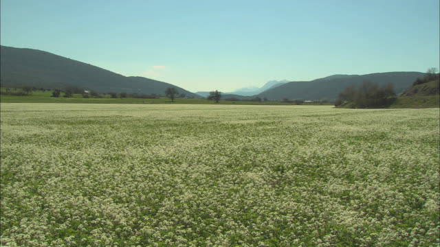 ws view of meadow with wildflowers / papigo, ipiros, greece - alm stock-videos und b-roll-filmmaterial