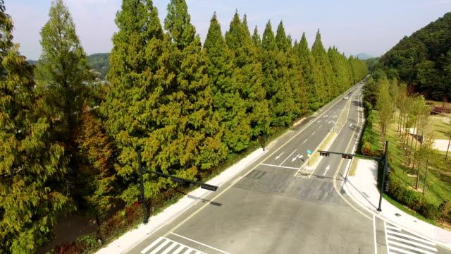 View of Metasequoia-lined street with Meta Provence(Travel Destinations)