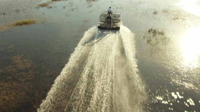 vídeos de stock, filmes e b-roll de ms aerial ts tu view of miccosukee airboat moving on water in everglades / florida, united states - parque nacional de everglades
