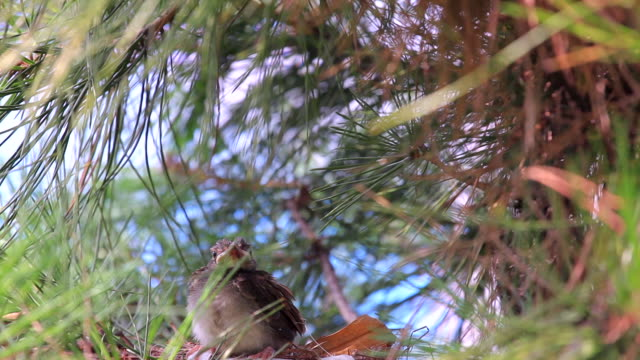view of microscelis amaurotis on the tree branch - young bird stock videos & royalty-free footage