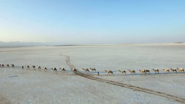 view of migrating camel herd at danakil desert - camel train stock videos & royalty-free footage